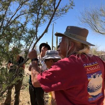 examining tree