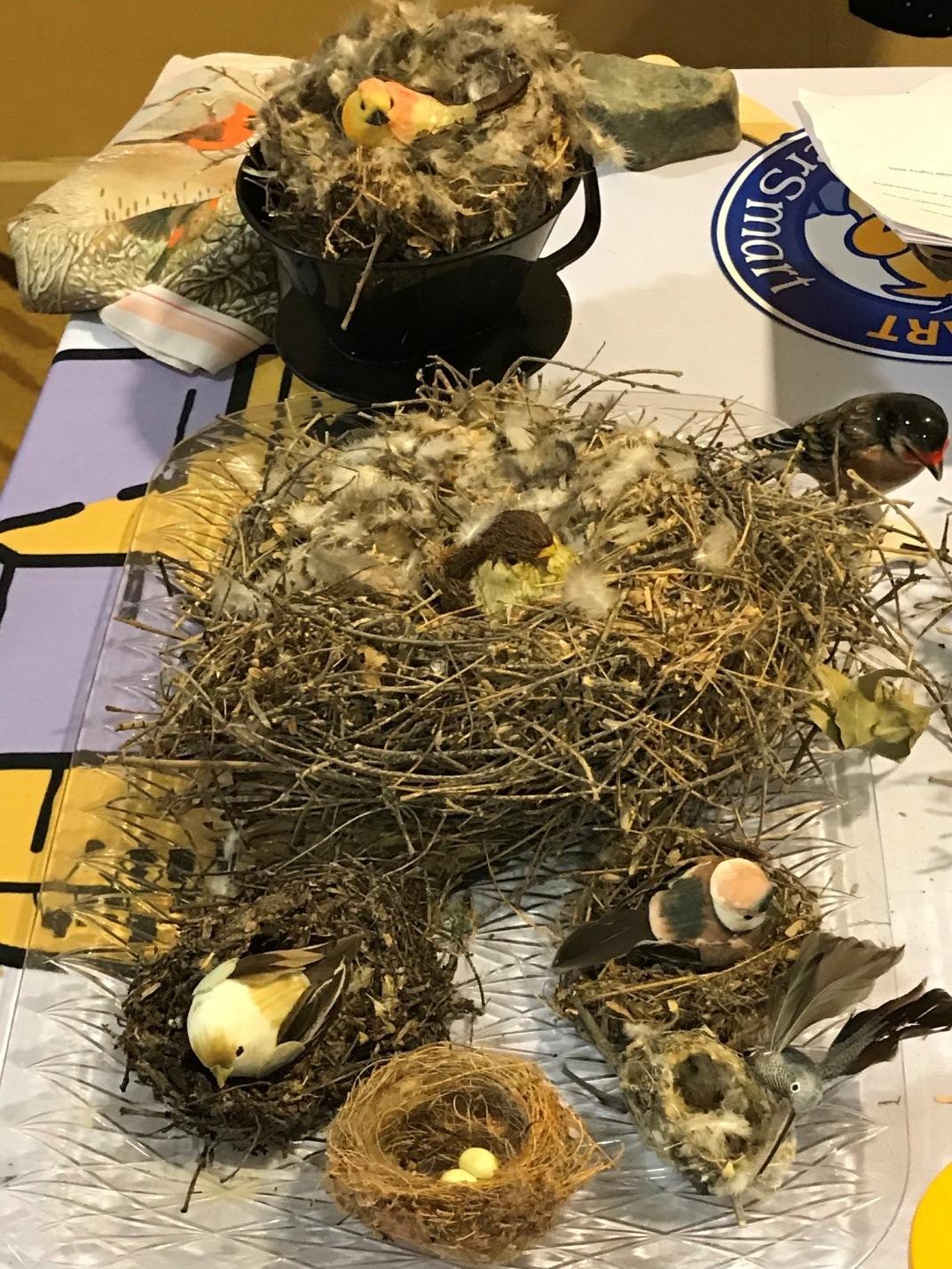 nests-1.jpg