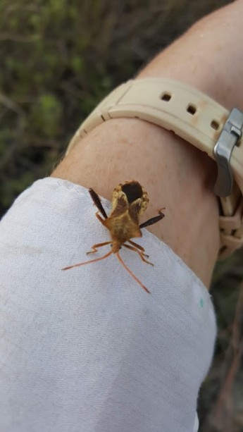 spring bug