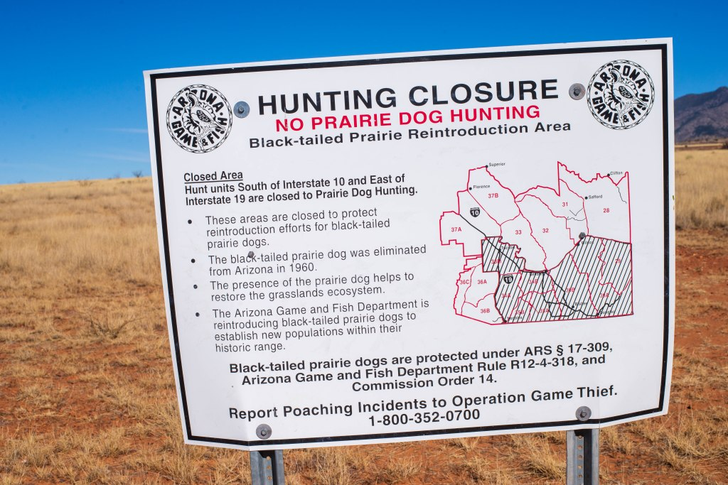 """A sign post stands in front of an open field of grass. The sign reads, """"Hunting Closure. No prairie dog hunting. Black-tailed prairie dog reintroduction area."""""""